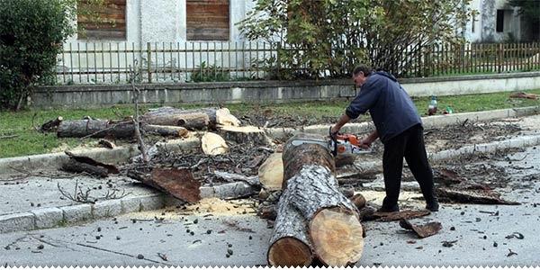 drvosječa